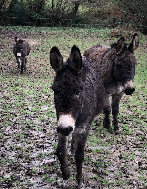The Donkey Family